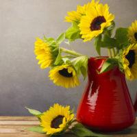Vor einer grauen Wand steht eine rote Kanne mit Sonnenblumen auf einem Holztisch. Neben der Kanne liegt ebenfalls eine Blüte mit ein paar Blättern des Stiels
