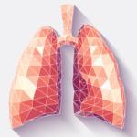 Auf dem Bild sieht man eine menschliche Lunge als 3-D-Illustration in polygoner Optik