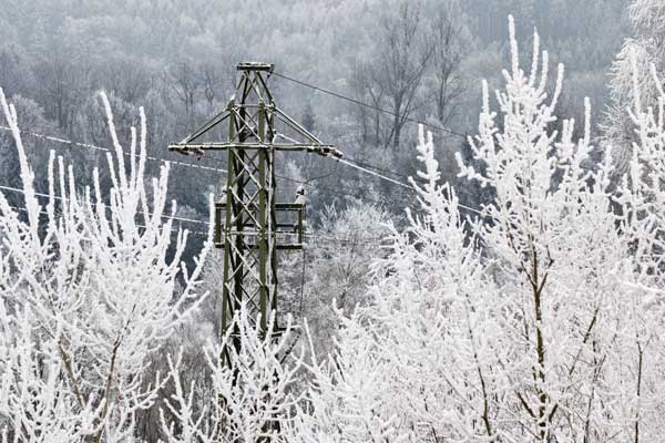 Das Bild ist ein Foto. Im Vordergrund sind vereiste Büsche oder Baumwipfel zu sehen, im Hintergrund befindet sich ein vereister Strommast