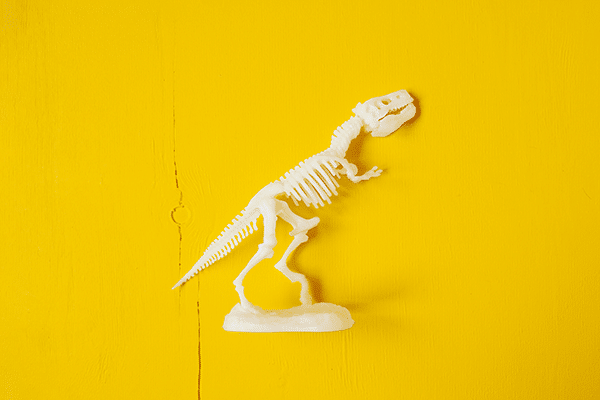 Weißes Skelett eines Dinosauriers vor gelbem Hintergrund